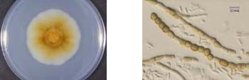 結露防止テープのカビ汚染例-4