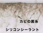 シリコンシーラントのクロカビ-3