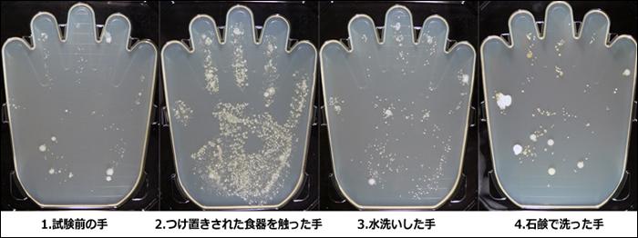 手洗いによる除菌効果